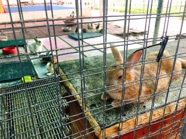 兔子迷宮_170803_0012.jpg